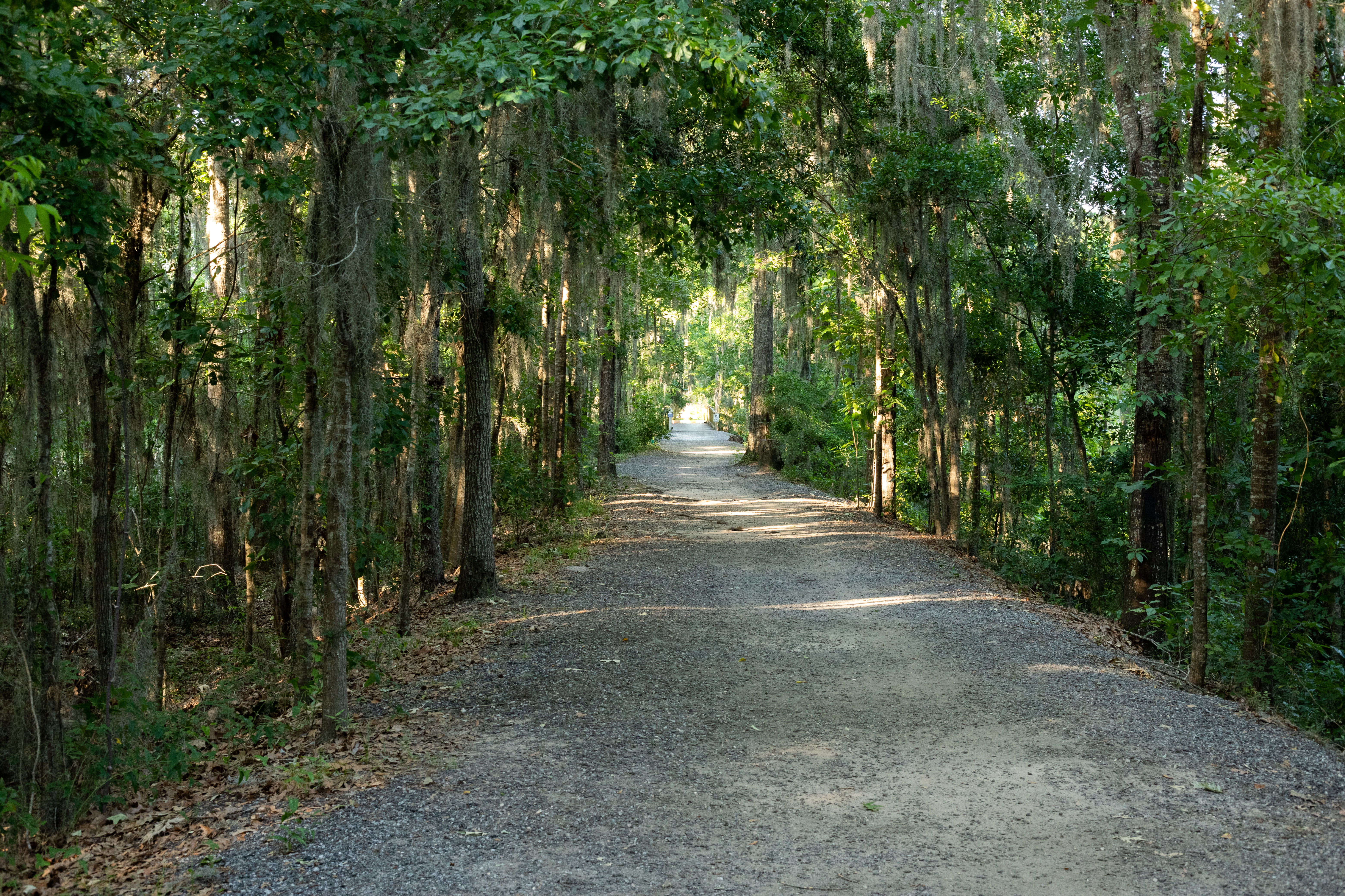 shaded walking trail